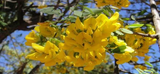 flora silvestre salvadoreña